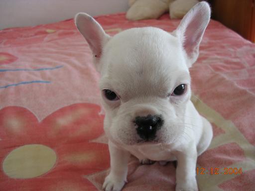 我家的小狗狗,还没有起名字!(图)