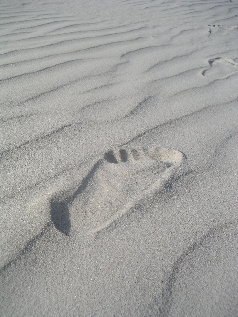 沙滩上发现了熊掌印