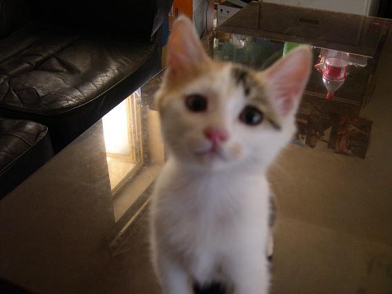 我家有一只可爱小猫,是别人不要了放在我家门口的