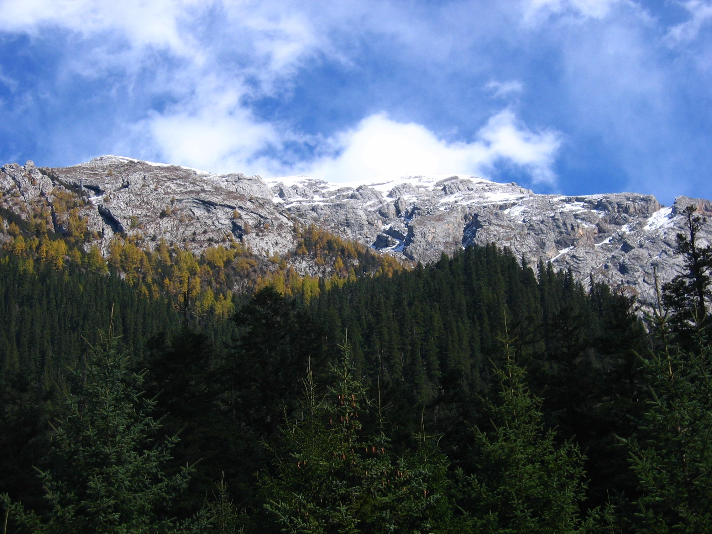 原始森林景观照片