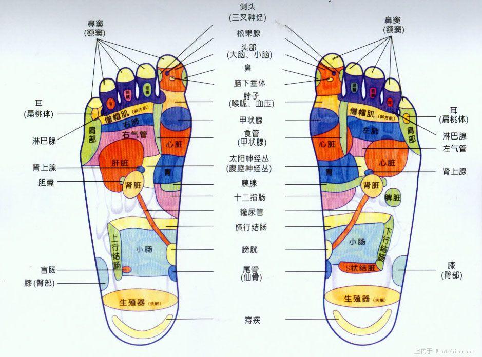 脚底穴位图,脚底按摩的原理