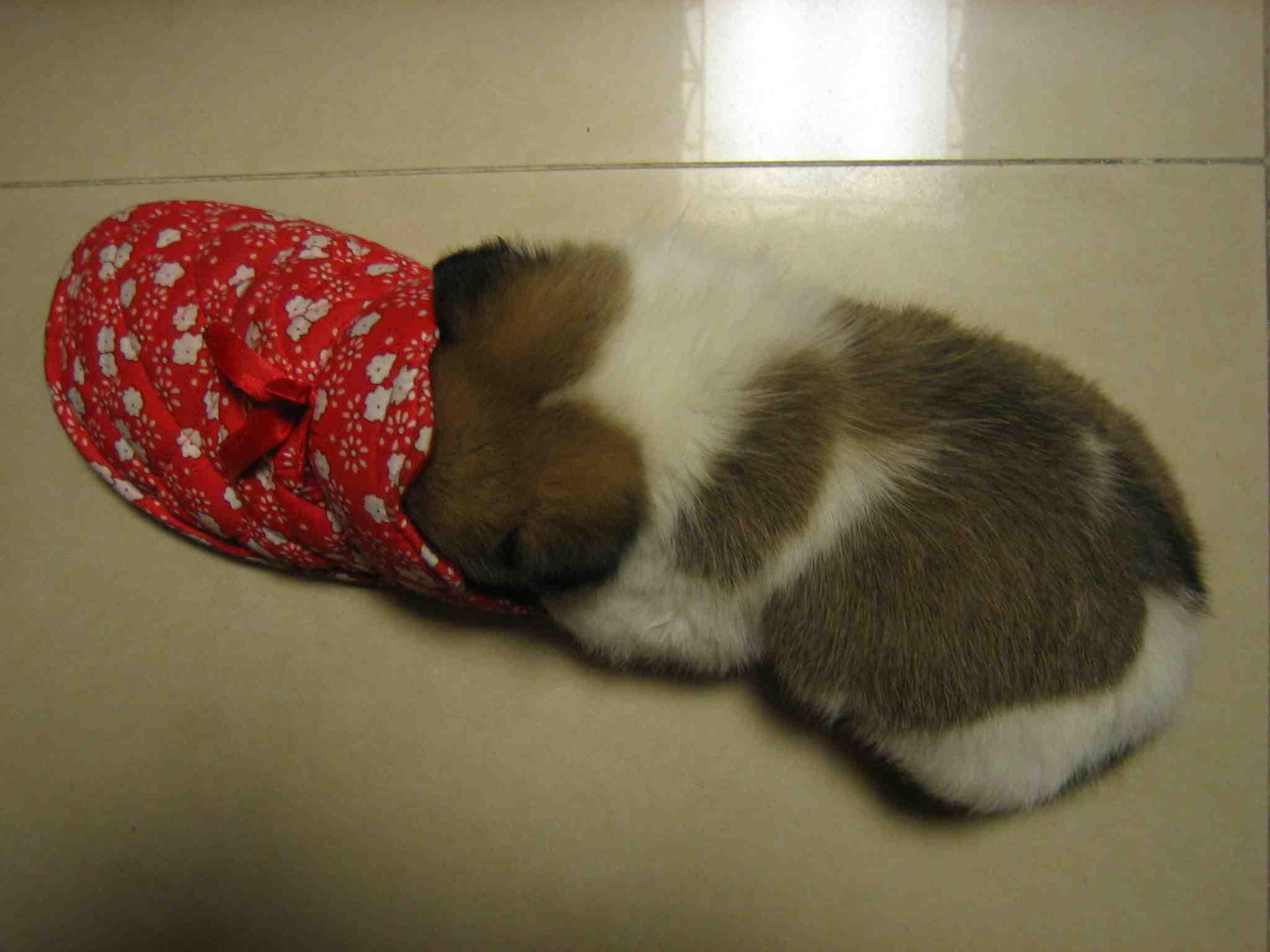 我有只可爱小狗想送人