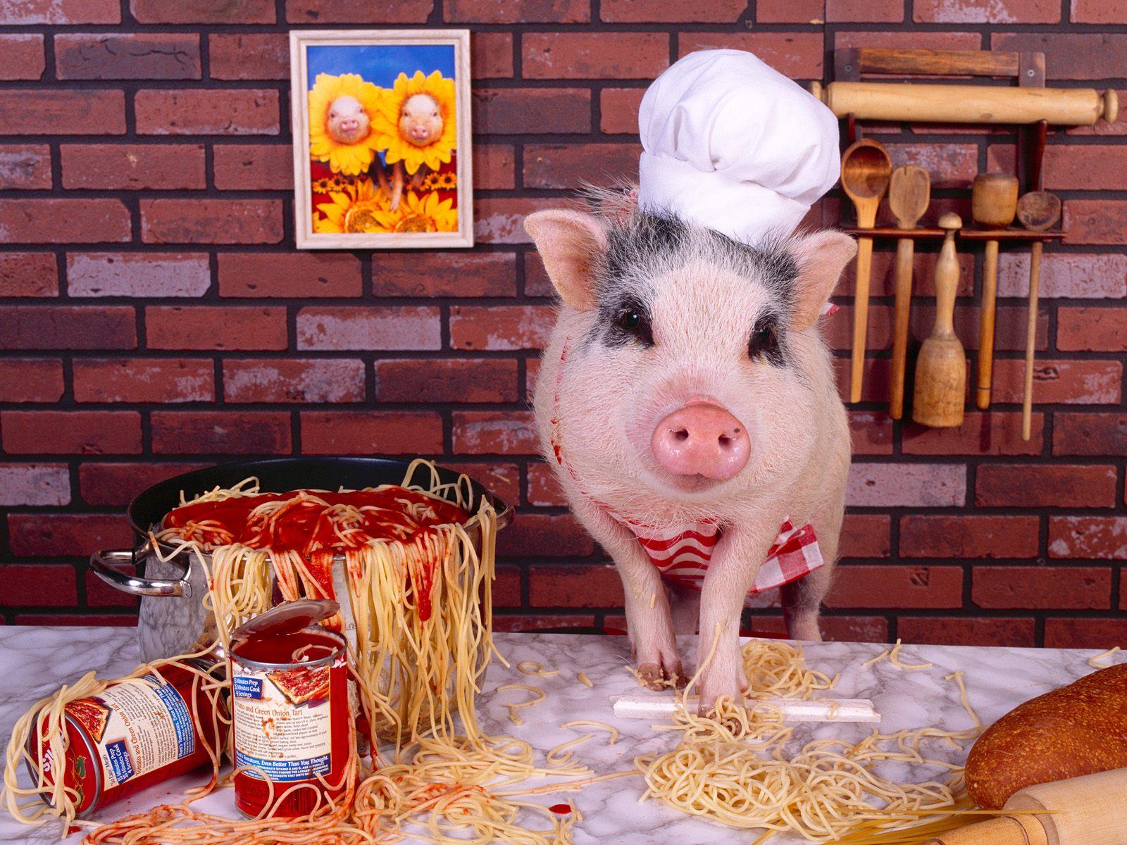 猪年头像可爱图片