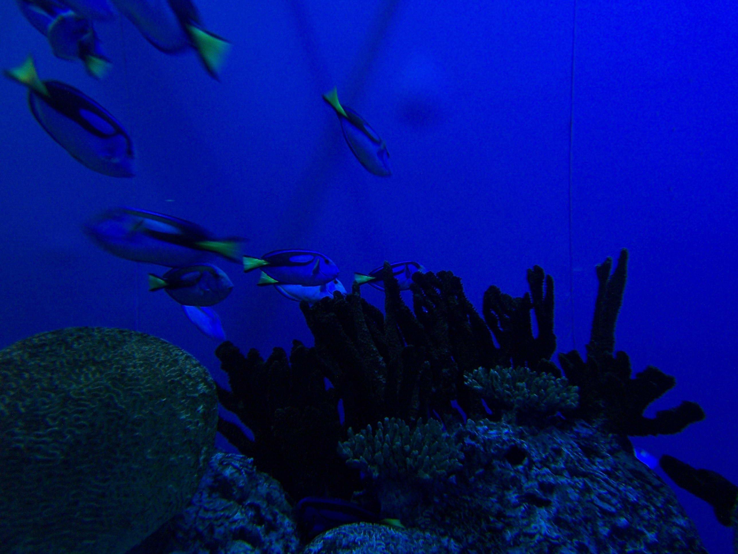 动物园,海洋馆1