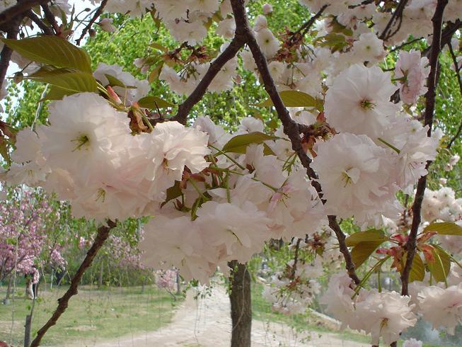 春天和花儿一样美
