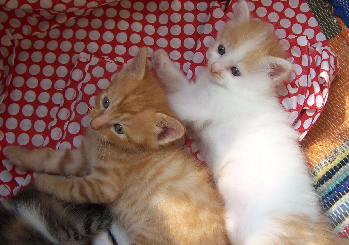 可爱小猫的照片