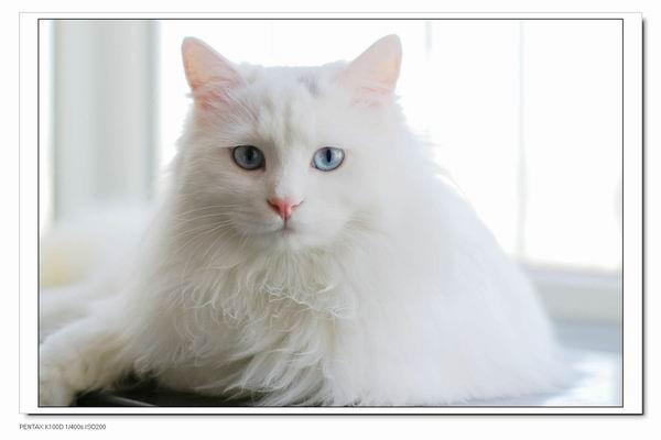 寻猫启示,可爱的小毛丢了……_回龙观社区网